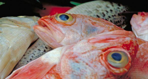 fische salzkammergood
