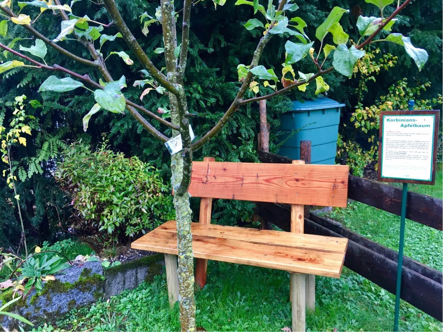 Korbinians Apfelbaum im Carolus Clusius Garten