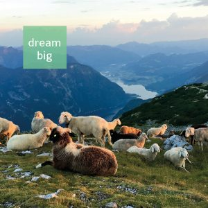 Postkarte Dream Big